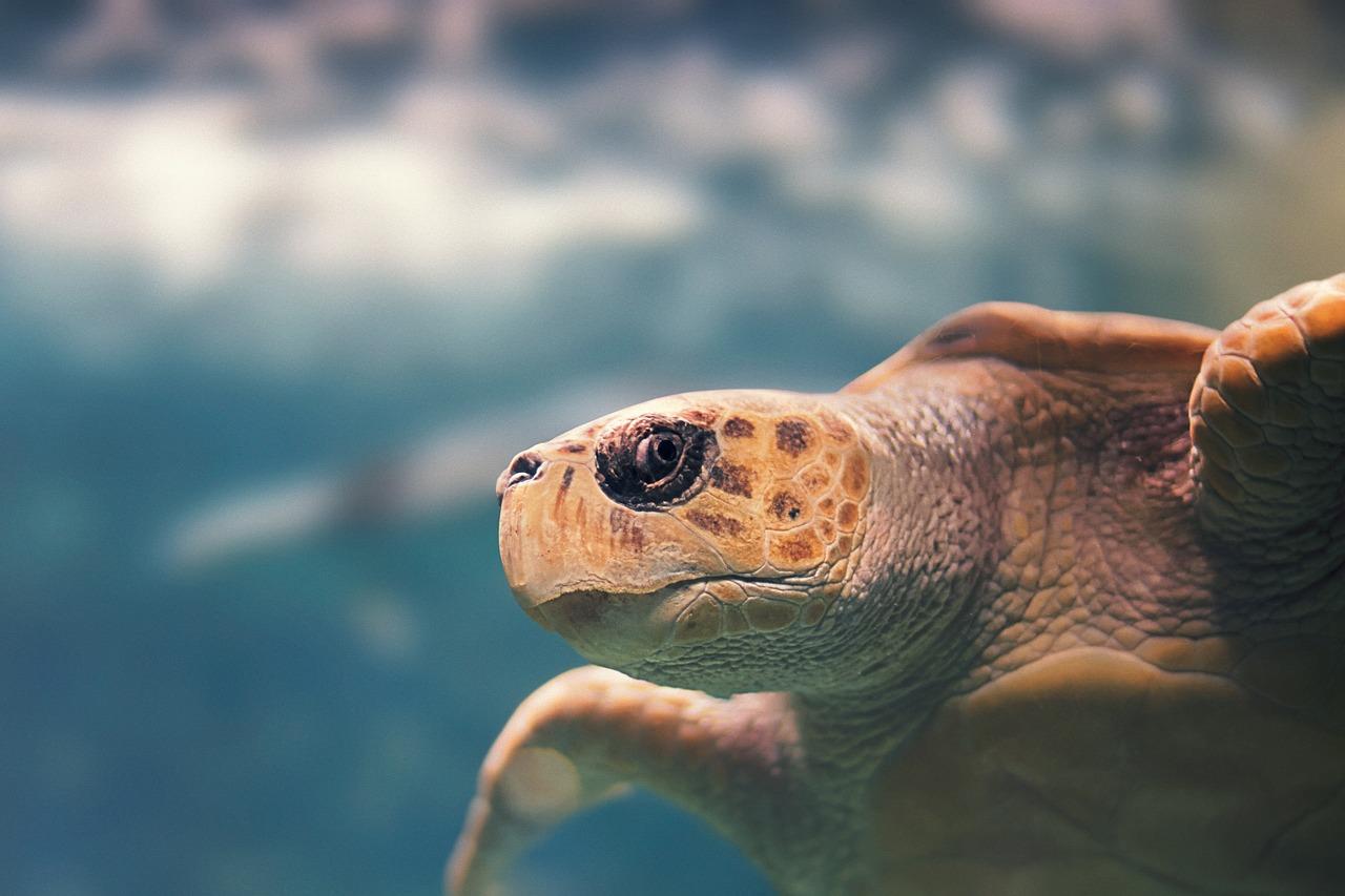 Acuario, Tortugas